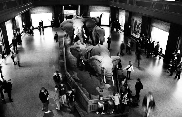 Elephant Room - American Museum of Natural History in NYC